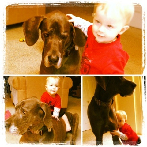 Grandson and Grand Dogs