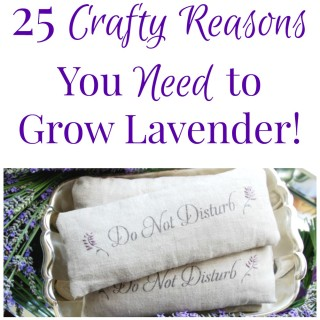 25 Crafty Reasons You Need to Grow Lavender