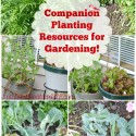 Beginners Companion Planting Resources for Gardening