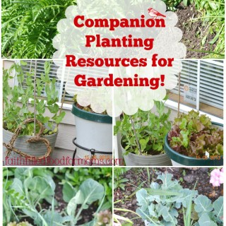 Companion Planting and Hows Your Garden Growing?