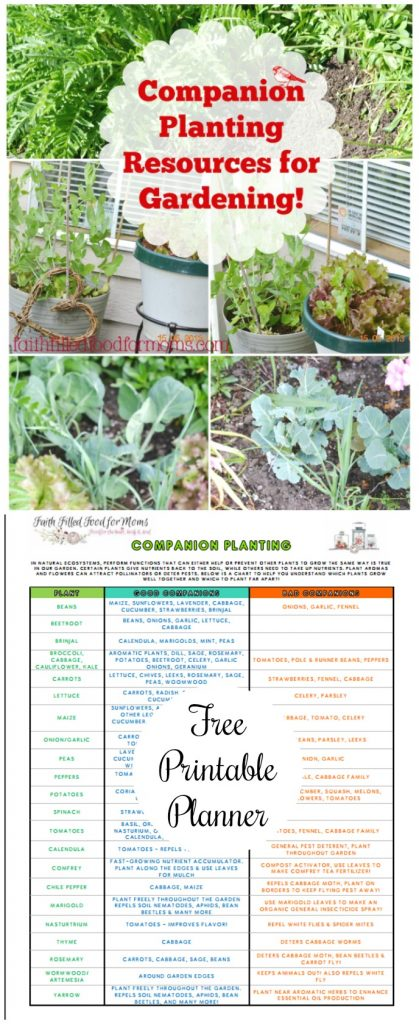 Beginners Companion Planting Resources for Gardening Free Printable Chart