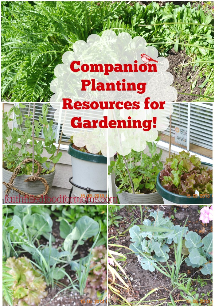 Companion Planting And Hows Your Garden Growing  Faith Filled