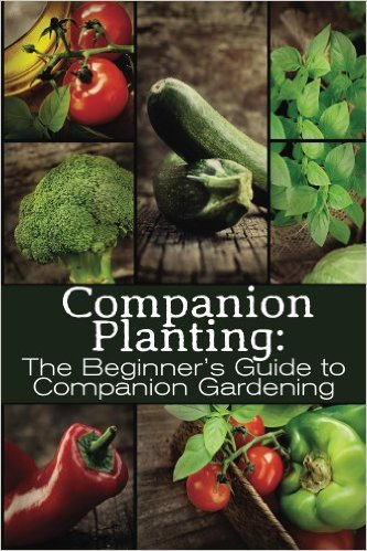 Companion Planting for Beginners