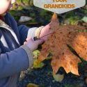 Fall-Activities-to-Share-with-Your-Grandkids