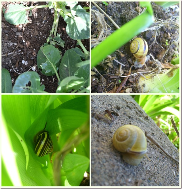 Garden Pests ~ Snails!