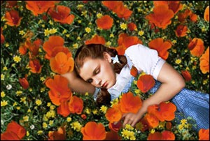 Legalism Part 2-How I Stumbled Into the Wizard of Oz Poppy Field and Fell Asleep