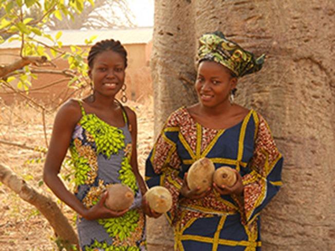 baobab ladies