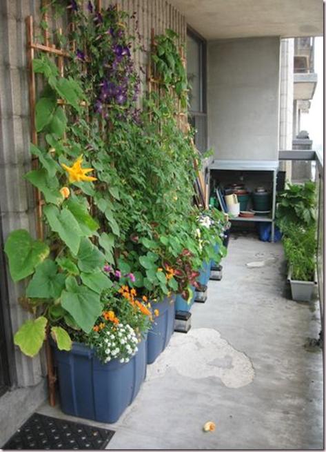 bucket gardening