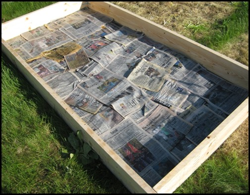 newspaper raised bed